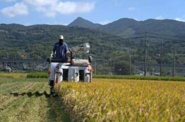 さわだ農園 稲刈りの様子