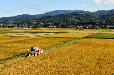 さわだ農園の田んぼの写真