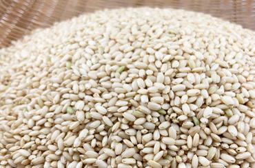有機もち米 玄米
